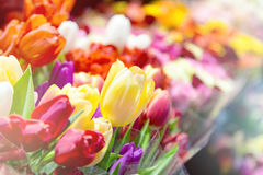 Tulips at a flower market Stock Photography