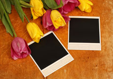 Tulips flower with photo frame Royalty Free Stock Images
