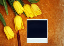Tulips flower with photo frame Royalty Free Stock Photo