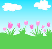 Tulips flowers Stock Photography