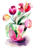Tulips Flowers Stock Image