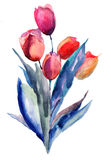 Tulips flowers. Red Tulips flowers, watercolor illustration Royalty Free Stock Image
