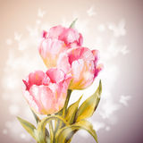 Tulips flowers background. Stock Photos