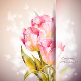 Tulips flowers background. Royalty Free Stock Image