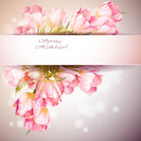 Tulips flowers background. Royalty Free Stock Photography