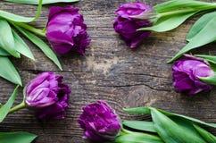 Tulips flowers background Stock Photos