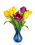 Tulips Flowers in blue vase isolated on white stock image
