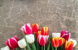 Tulips flowers bunch on Vintage newspaper background Royalty Free Stock Image