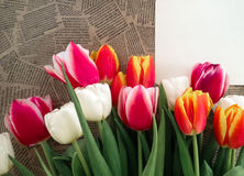 Tulips flowers bunch on Vintage newspaper background Stock Image