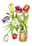Tulips flowers in ceramic pot isolated Stock Image