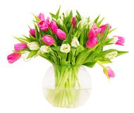 Tulips Flowers in Glass Vase Isolated over White Background, stock image