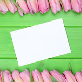 Tulips flowers with greeting card and copyspace Royalty Free Stock Photo