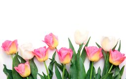 Tulips flowers isolated on white.Border frame background. Mother`s day,women`s holiday Stock Images