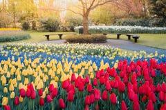 Tulips at Keukenhof gardens royalty free stock photo