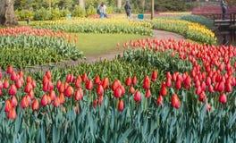 Tulips at Keukenhof gardens royalty free stock photography