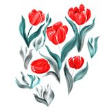 Tulips. Flowers, leaves, stems and buds . Use printed materials, signs, items, websites, maps, posters, postcards, packaging. Stock Photo