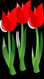 Tulips, Flowers, Red, Plants Royalty Free Stock Image