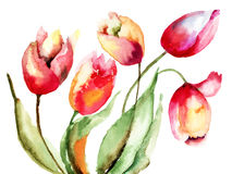 Tulips flowers. Red Tulips flowers, Watercolor painting Royalty Free Stock Photos