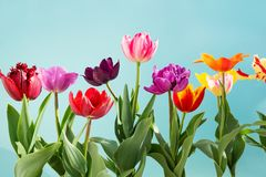 Tulips flowers spring background stock photo