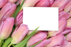 Tulips flowers in spring or mother's day with empty greeting car Stock Photo
