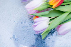 Tulips. The flowers on the table Royalty Free Stock Image