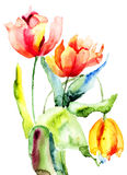 Tulips flowers. Three Tulips flowers, Watercolor painting Royalty Free Stock Image