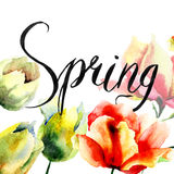 Tulips flowers and title Spring Royalty Free Stock Image