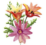 Tulips flowers. Watercolor illustration for your. Royalty Free Stock Image