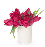 Tulips Flowers  on White Background Royalty Free Stock Photography
