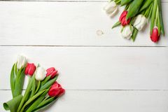Tulips flowers on white wooden background. Top view, frame, border, corner. Greeting card for womans day, mothers day, birthday, e. Aster or spring holiday royalty free stock photo