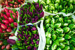 Tulips at the flowers wholesale market Royalty Free Stock Image