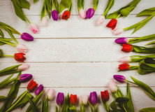 Tulips forming frame Royalty Free Stock Photography