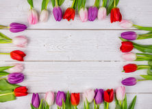 Tulips forming frame Royalty Free Stock Image