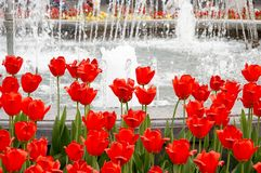 Tulips and fountain in garden Royalty Free Stock Image