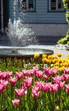 Tulips and fountain in park Stock Photography