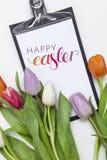 Tulips frescos no fundo branco Imagens de Stock Royalty Free