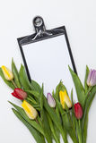 Tulips frescos no fundo branco Imagem de Stock Royalty Free