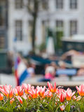 Tulips in front of an Amsterdam canal Stock Images