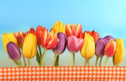 Tulips in front of blue sky. Line of colorful tulipseaster holidays in front of blue sky royalty free stock photography