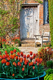 Tulips in a garden royalty free stock photo