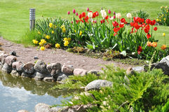 Tulips in garden Stock Photo