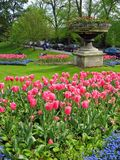 Tulips Garden. Beautiful tulips during spring time stock photo