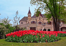 Tulips garden. Near a building Stock Images