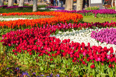 Tulips garden - Gulhane in Istanbul Royalty Free Stock Images