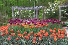 Tulips in Garden Stock Photos