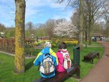 Tulips garden Stock Photo