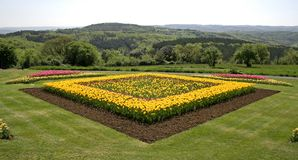 Tulips in garden with view. Yellow and pink tulips in garden stock photo