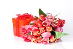 Tulips and gift Stock Image