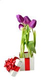 Tulips and gift box Royalty Free Stock Images