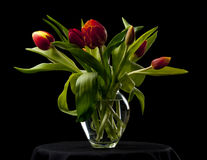 Tulips in a glass vase. Bunch of tulips in a glass vase with a black background Stock Photo